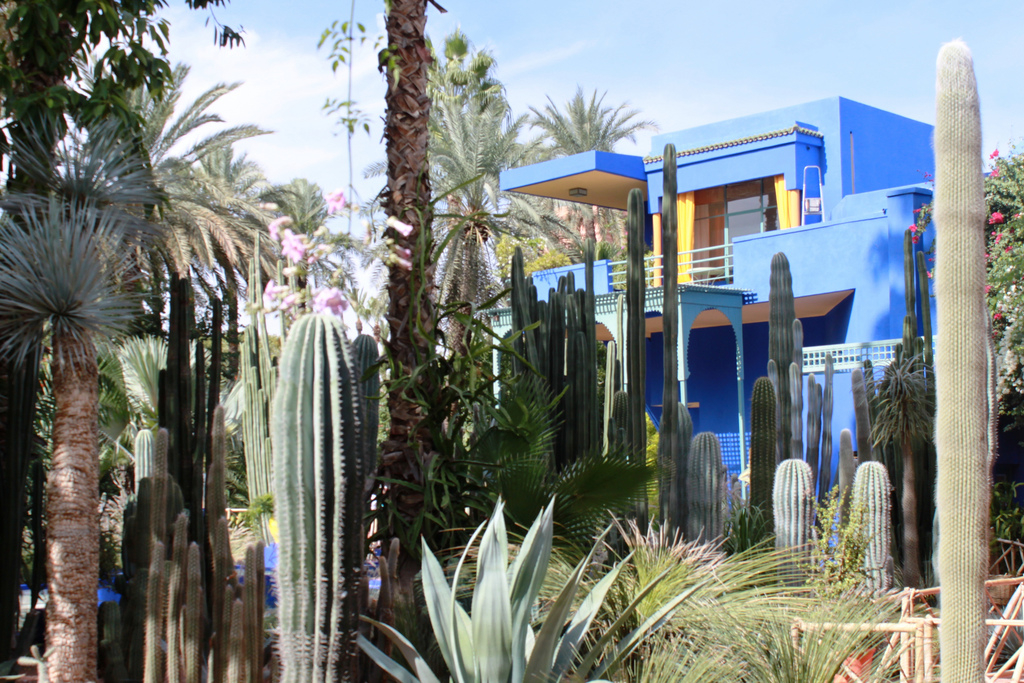 Jardin Marjorelle, museums in Marrakech, things to do in Morocco
