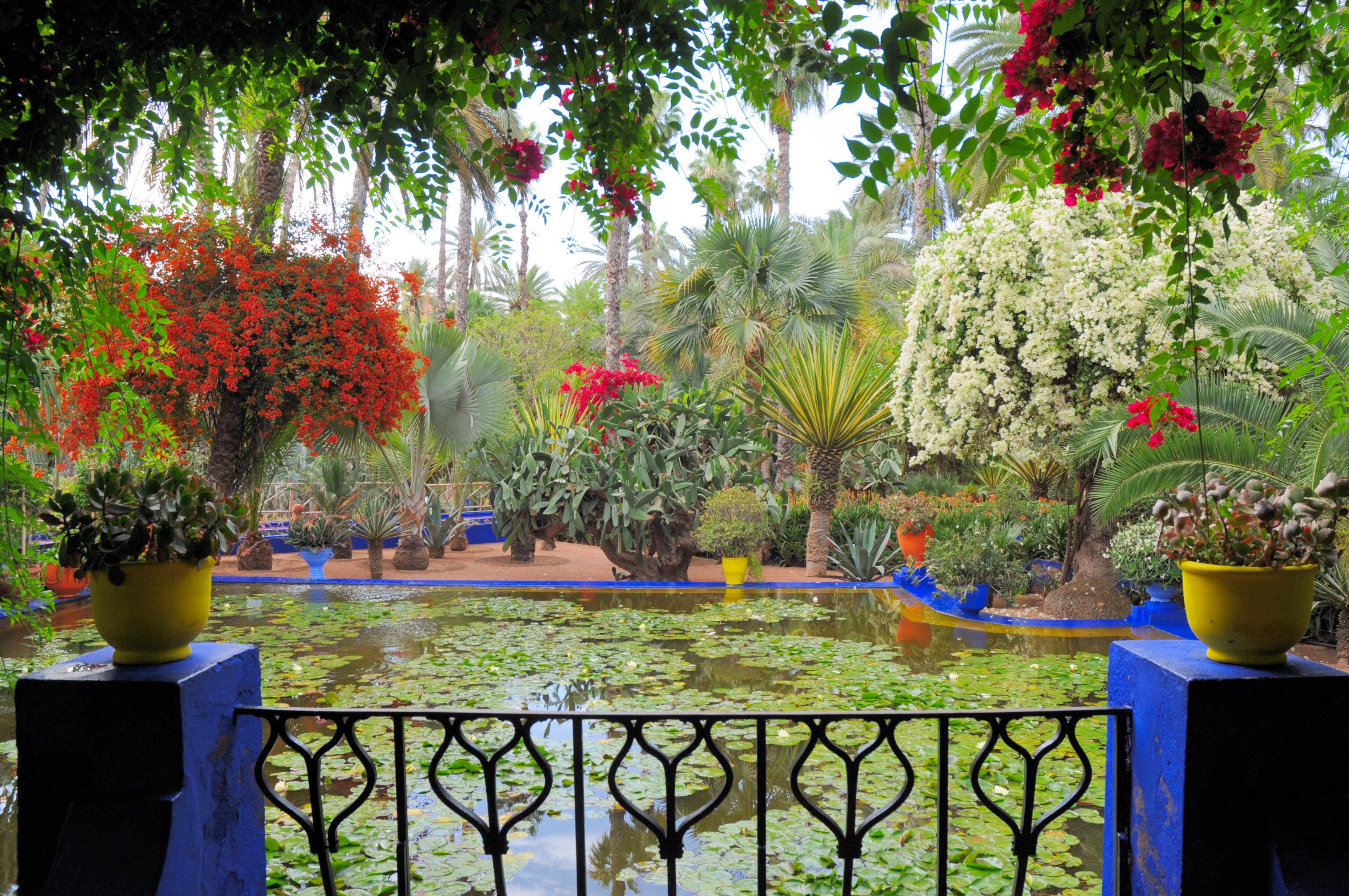 Jardin Marjorelle, things to do in marrakech